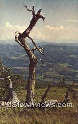 Whitetop Mountain, West Virginia,     ;     Whitetop Mountain, WV Postcard