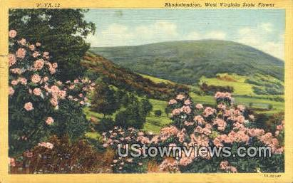 Rhododendron - State Flower, West Virginia WV Postcard