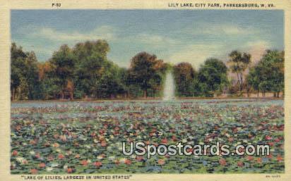 Lily Lake, City Park - Parkersburg, West Virginia WV Postcard