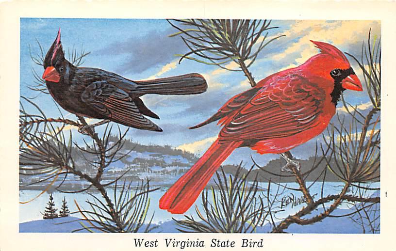 State Bird WV