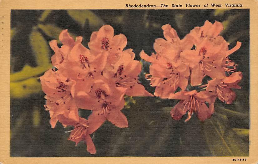 State Flower WV