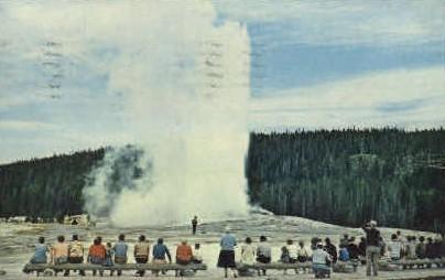 Old Faithful Geyser - Yellowstone National Park, Wyoming WY Postcard