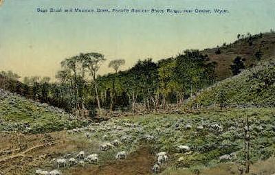 Sage Brush & Mountain Grass - Casper, Wyoming WY Postcard