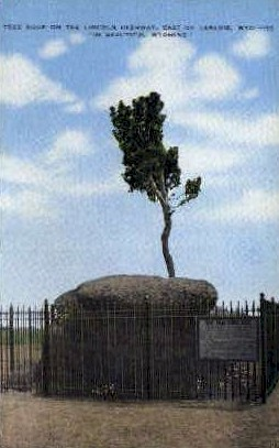 Tree Growing out of Solid Rock - Sherman Hill, Wyoming WY Postcard