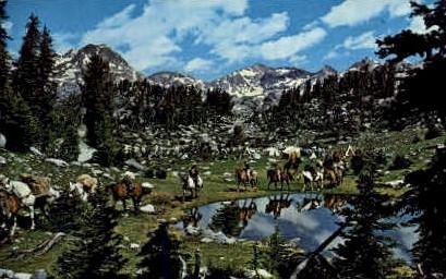 Pack Trip - Wind River Range, Wyoming WY Postcard