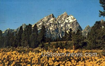 Balsam Root - Jackson Hole, Wyoming WY Postcard