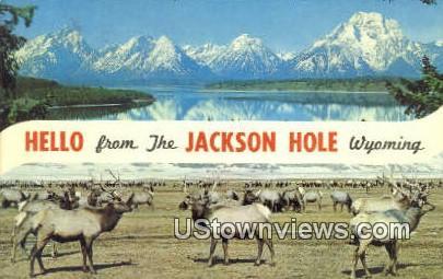 Jackson Hole, WY, Wyoming, Postcard