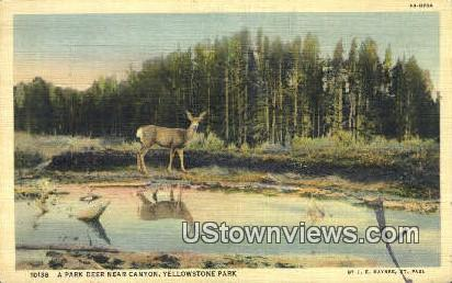 Deer - Yellowstone National Park, Wyoming WY Postcard