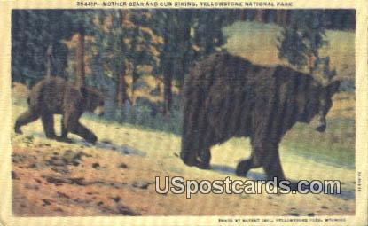 Mother Bear & Cub - Yellowstone National Park, Wyoming WY Postcard