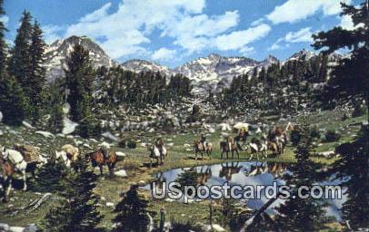Pack Trip - Duboise, Wyoming WY Postcard