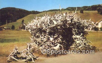 House of Antlers - Yellowstone Park, Wyoming WY Postcard