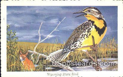 Western Meadowlark - State Bird, Wyoming WY Postcard