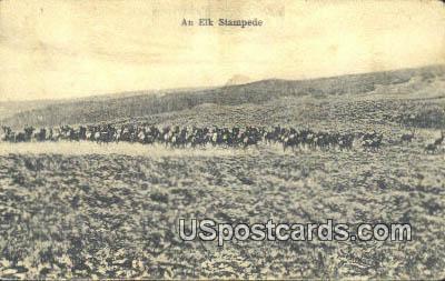 Elk Stampede - Misc, Wyoming WY Postcard
