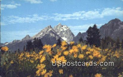 Teton National Park, Wyoming Postcard      ;      Teton National Park, WY