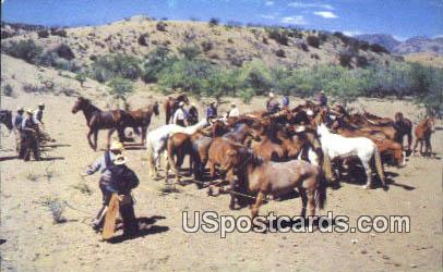 Wild Horse Herd - Misc, Wyoming WY Postcard