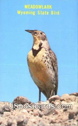 Meadowlark - State Bird, Wyoming WY Postcard