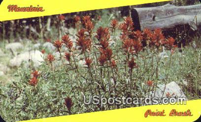 State Flower, Wyoming Postcard      ;      State Flower, WY
