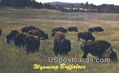 Buffaloes - Misc, Wyoming WY Postcard