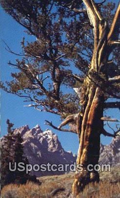 Cathedral Group - Grand Teton National Park, Wyoming WY Postcard