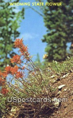 Indian Paint Brush - State Flower, Wyoming WY Postcard