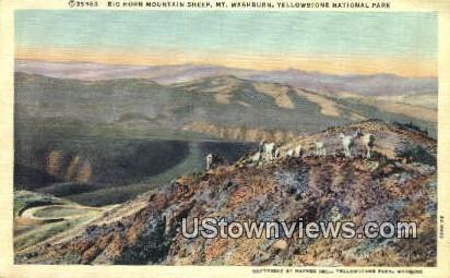 Big Horn Mountain - Yellowstone National Park, Wyoming WY Postcard