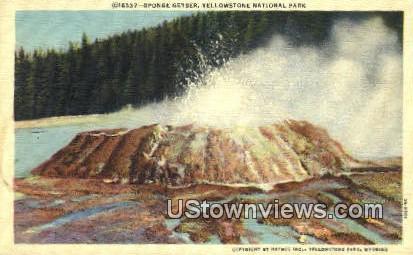 Sponge Geyser - Yellowstone National Park, Wyoming WY Postcard