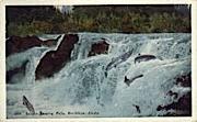 Salmon Leaping Falls - Ketchikan, Alaska AK Postcard
