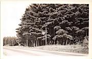 State Forest Park - Brattleboro, Vermont VT Postcard