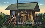 Cabin - Cedar Stump, Washington WA Postcard