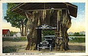 Giant Cedar Stump - Snohomish County, Washington WA Postcard