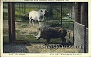 Washington Park Zoological Garden - MIlwaukee, Wisconsin WI Postcard