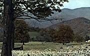 Spruce Knob  - Circleville, West Virginia WV Postcard