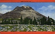Sheep Grazing - Misc, Wyoming WY Postcard