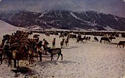 National Elk Refuge - Jackson Hole, Wyoming WY Postcard