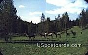 Elk - Misc, Wyoming WY Postcard