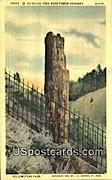 Petrified Tree, Tower Highway - Yellowstone Park, Wyoming WY Postcard