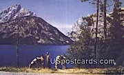 Jenny Lake, WY Postcard       ;      Jenny Lake, Wyoming