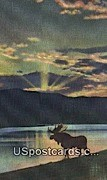 Bull Moose - Misc, Wyoming WY Postcard