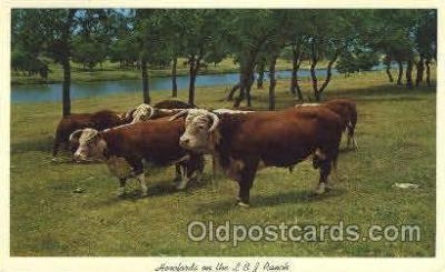 wes002260 - L B J Ranch, Texas Western Cowboy, Cowgirl Postcard Postcards