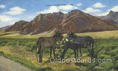 wes002285 - Western Cowboy, Cowgirl Postcard Postcards