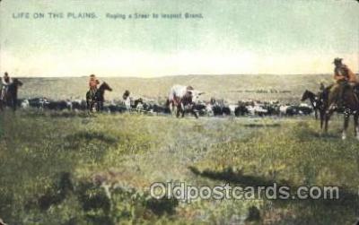 wes002547 - Roping a Steer Western Cowboy, Cowgirl Postcard Postcards