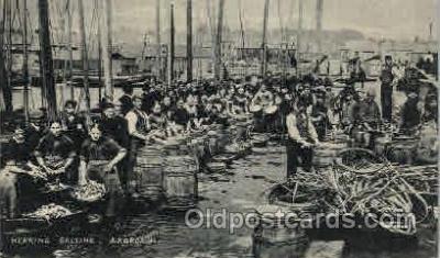 wow001007 - Herring Salting, Arbroath Woman Working Postcard Postcards