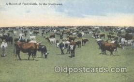 wes000201 - Western Cowboy Postcard Postcards