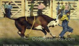 wes000313 - Brahma Bull tickling George Mills, Cowboy Western Postcard Postcards