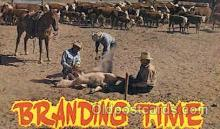 wes000335 - Branding Time Western Cowboy, Cowgirl Postcard Postcards