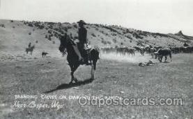 wes000355 - Branding Calves Western Cowboy, Cowgirl Postcard Postcards