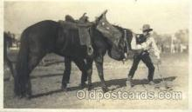 wes000372 - Calgary Stampede Western Cowboy, Cowgirl Postcard Postcards