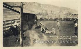 wes000395 - Branding Western Cowboy, Cowgirl Postcard Postcards