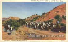 wes000424 - Rounding Up Cattle Western Cowboy, Cowgirl Postcard Postcards