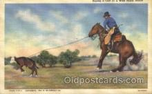 wes000443 - Roping Cattle Western Cowboy, Cowgirl Postcard Postcards